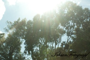 kaliurang tree