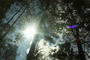kaliurang tree6